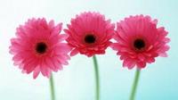 flower78