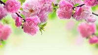 Ngày 29.04.2016: Thứ Sáu sau Chúa Nhật V Phục Sinh năm C