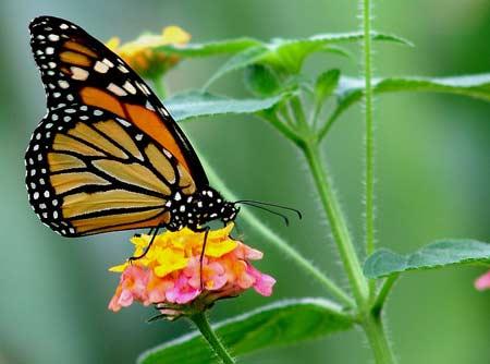 Slide: Bài học từ loài bướm