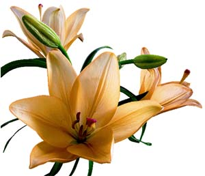 Những bông hoa nhỏ