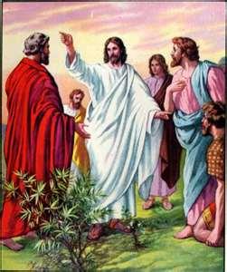 Nghe giảng chúa nhật 16 thường niên B (2009 - 2021)