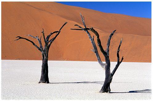 Tiếng Thì Thầm Của Sa Mạc